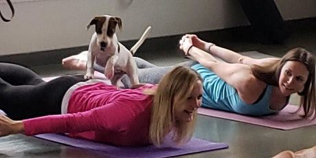 Doggy Noses & Yoga Poses - Paws and Poses on Tap at Back Bay Brewing! tickets