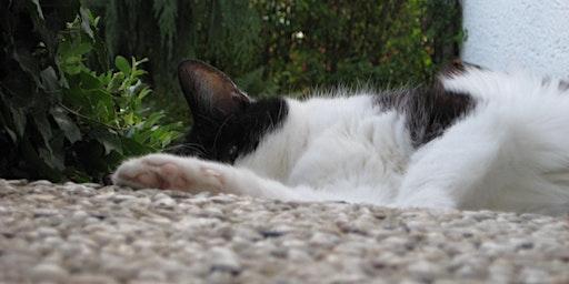 Seminar für Tierärzte in Frankfurt 25.04.2020: Katzenkrankheiten: Aktuelle Ansätze in der Endokrinologie