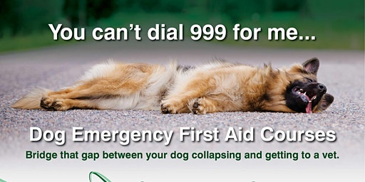 ITC, Emergency First Aid for Dogs (3 Hours