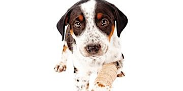 ITC, First Aid for Dogs (6 Hours)