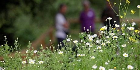 RSPB Beginners Guide to the Healing Power of Herbs tickets