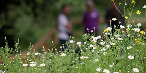 RSPB Beginners Guide to the Healing Power of Herbs