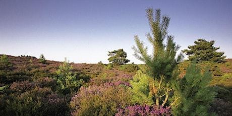 Dorset Reserves Meeting tickets