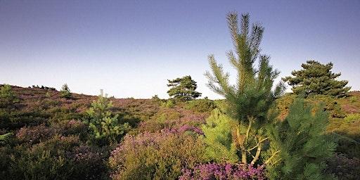 Dorset Reserves Meeting