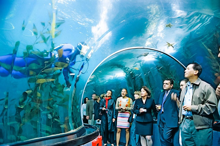 Underwater SilentWalk + Live-to-Headphone Concert at Aquarium of the Bay image
