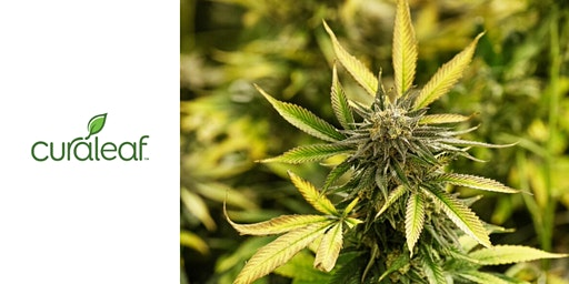 Warren County for Medical Cannabis