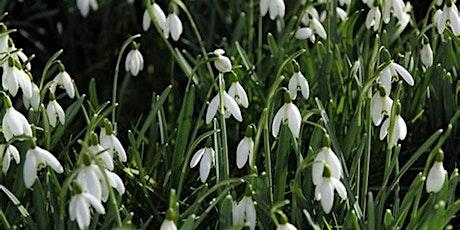 Snowdrop Garden Stroll & Coffee Morning, Loton Park, Alberbury, SY5 9AJ tickets