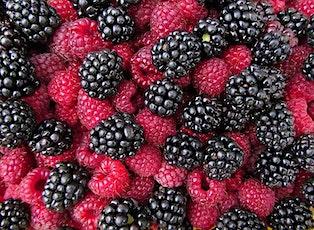 Small Fruit Series:  Raspberries, Blackberries- Brambles! tickets