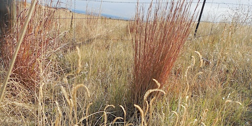 Basic Grass ID and Terminology August 21 & 28