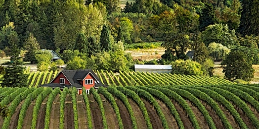 Oregonian Wines
