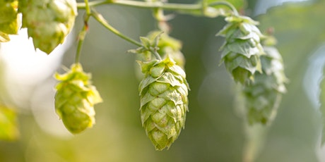 How to Propagate and Grow Hops - Fort Collins Taproom tickets