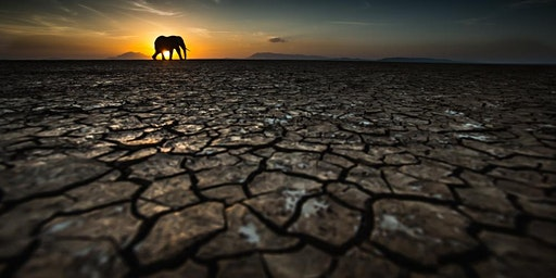 Wildlife through a lens by Tom Way
