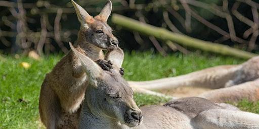 Australian Bushfire Animal Rescue Sew-In