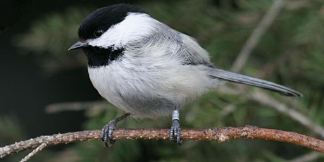 Bird Banding tickets