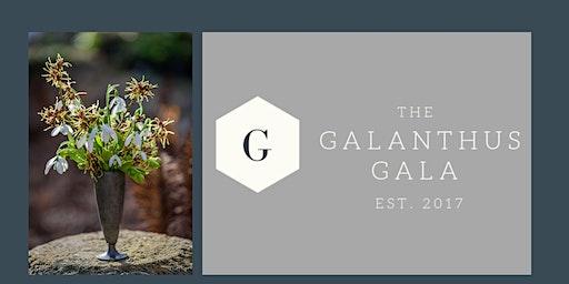 Galanthus Gala 2020