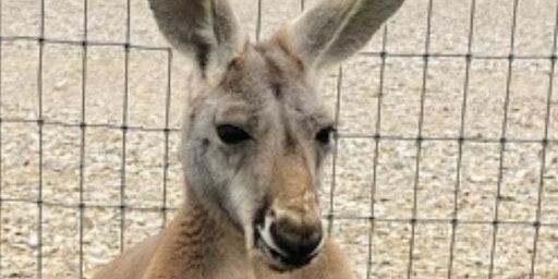 A KANGAROO AND YOU-AUSTRALIA DAY 2020