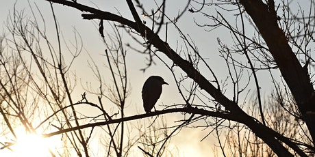 Community Science Training - Surveying Birds tickets
