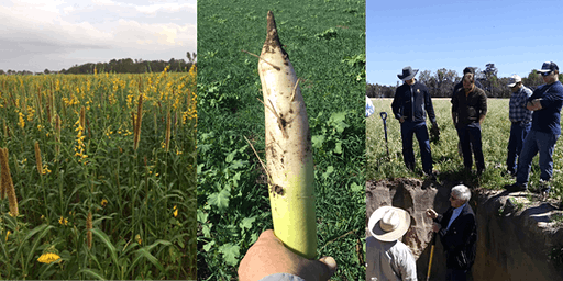 Soil Health and Cover Cropping Workshop
