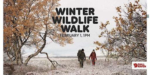 Winter Wildlife Walk