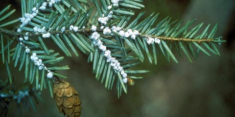 Hemlock Woolly Adelgid Monitoring Workshop tickets