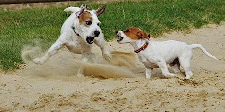 Canine Body Language | Hessle tickets