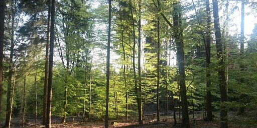 Kraftort Wald - mit Übernachtung