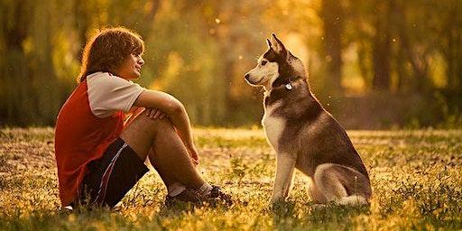 Taal van de hond: Gevorderd