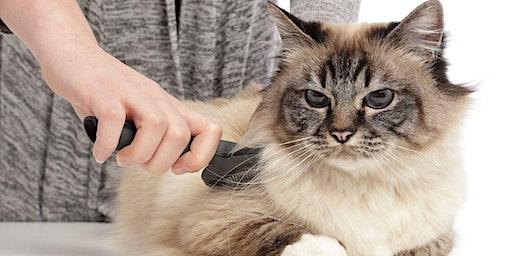 Initiatie huid en vacht: kat