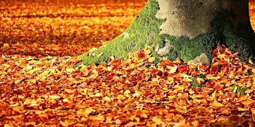 Herbstmarkt Rittergut Birkhof