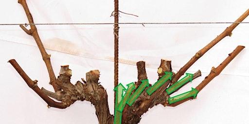 Pruning School - Featuring UvaSapiens Vineyard Consulting Team