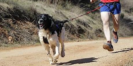 Sporten met de hond: Lopen tickets