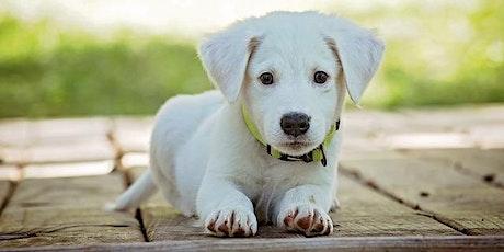 Masterclass: Puppy Coaching tickets
