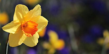 Spring Half Day Yoga Retreat tickets
