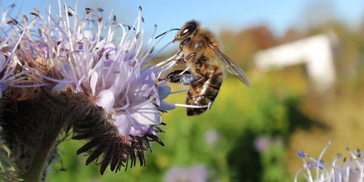 Come and register your garden for Stoneybatter's Pollinator Plan!
