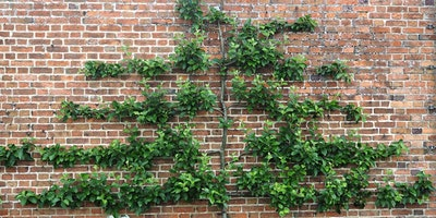 The Art of Espalier