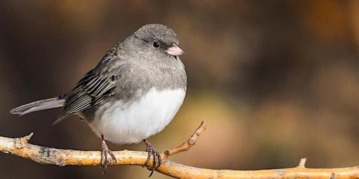 April Guided Birding Walk