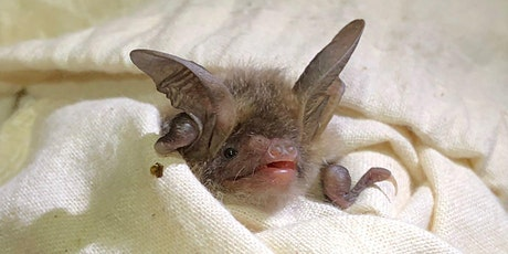 Introduction to Bat Care! tickets