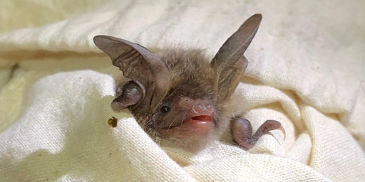 Introduction to Bat Care!