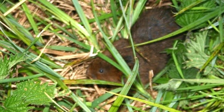 Water Voles at Leigh Woods with Chris Sperring tickets
