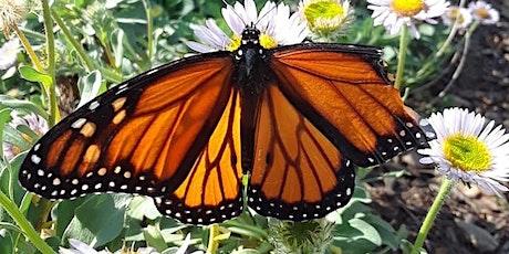 Euphoric Butterfly Kisses Morning Mini/Retreat Escape Vinyasa Flow tickets