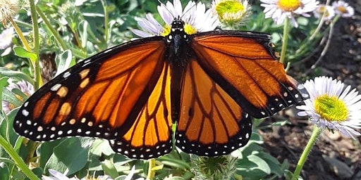 Euphoric Butterfly Kisses Morning Mini/Retreat Escape Vinyasa Flow