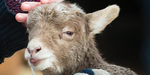 The Art of Shearing: A Sheep to Shawl Demonstration
