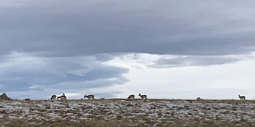 A Climate Solution: Bipartisan and For Wyoming