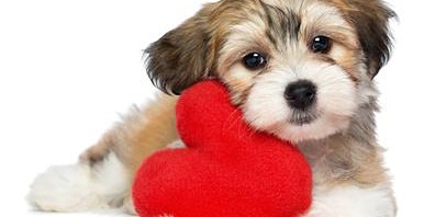 Vets for Pets - Dog Friendly Valentine's Fundraiser