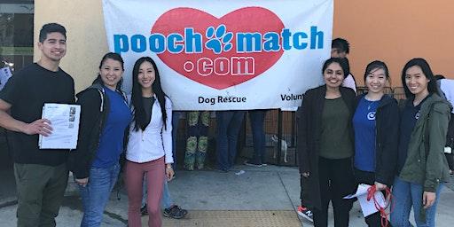 Volunteer Event: Pooch Match
