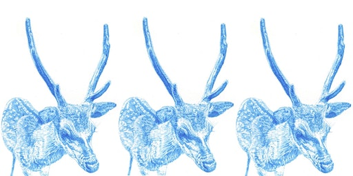 NORTHUMBRIAN WILDLIFE BIRO DRAWING WORKSHOP SESSION 2