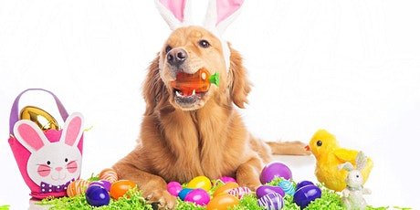 Easter Photos Benefiting Cozy Cat Cottage (New Albany) tickets