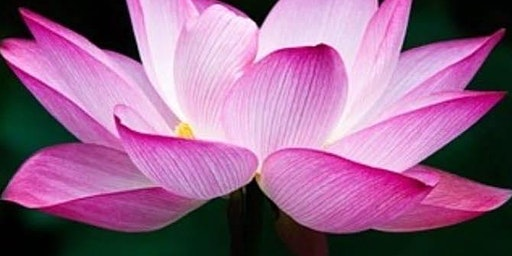 """I Am A Lotus Woman """"The Stages Of A Lotus"""""""