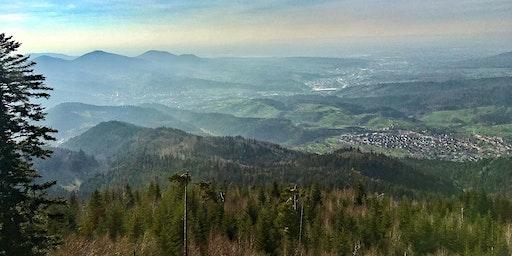 Single-Wanderung Bad Herrenalb - Teufelsmühle (30+)