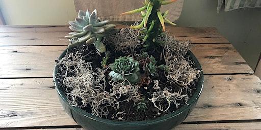 Succulents & Sangria